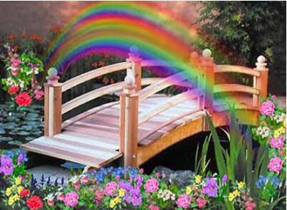 verbondenheid rainbowbridge