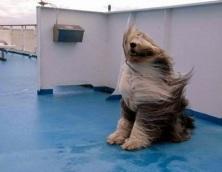 Afbeeldingsresultaat voor de wind van voor krijgen