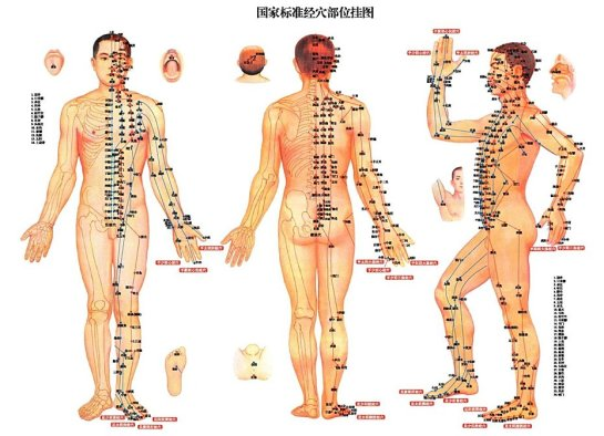Afbeeldingsresultaat voor acupunctuurpunten overzicht