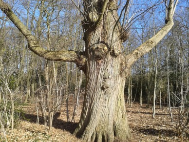 Afbeeldingsresultaat voor boomknuffel