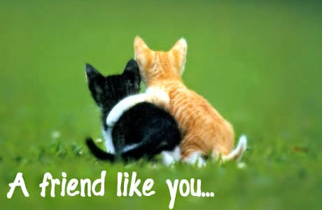 Afbeeldingsresultaat voor vriendschap